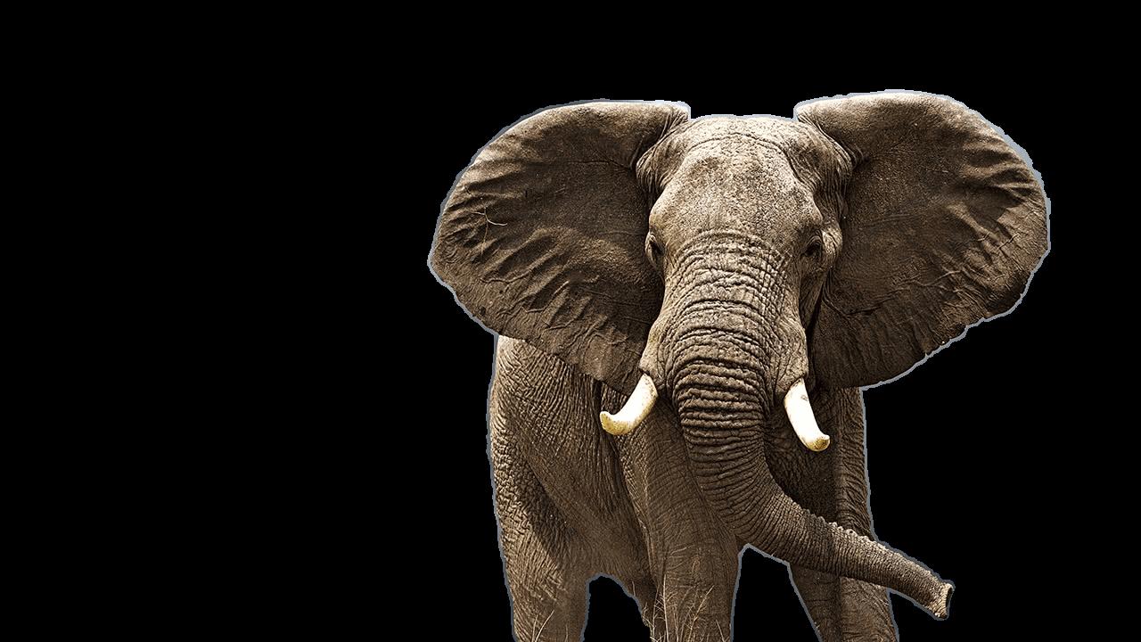Addo Elephant National Park Safaris Big 5 Tours Port Elizabeth